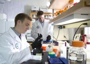 insulin-producing-gene