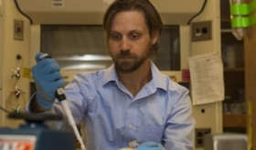 Treatment to Better Regulate Insulin Discovered